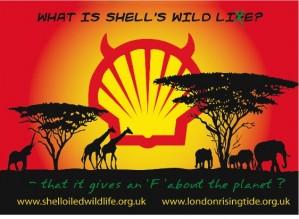 Shell'den kan parası !..